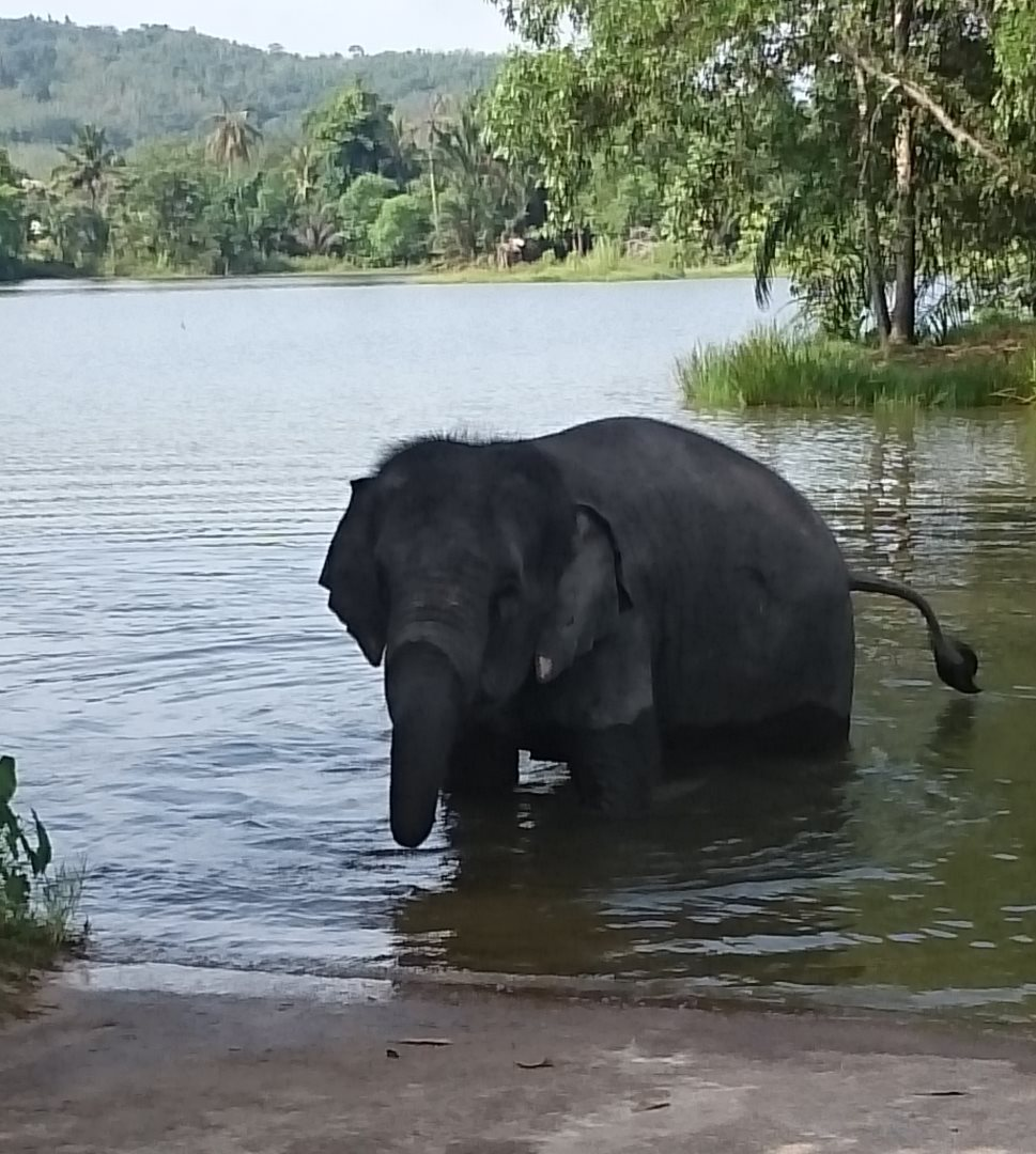 Impression-Thailand-Elefant