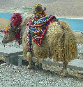 Tibet-Kaufmann